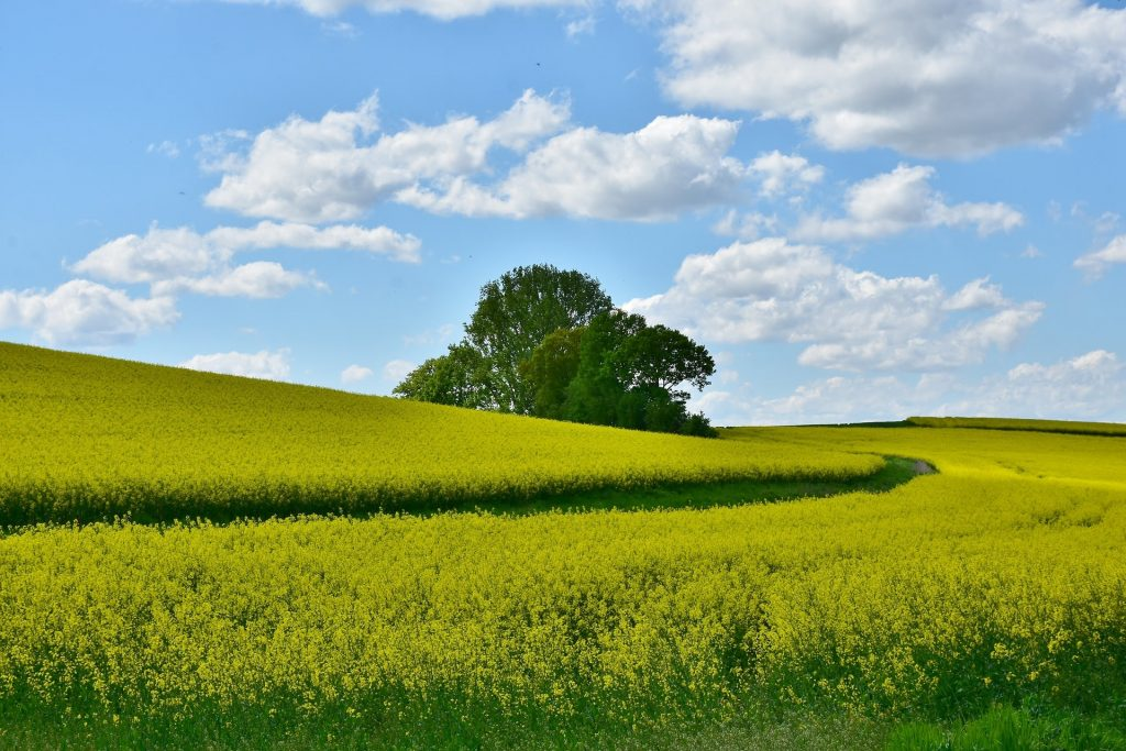 image of a green field with a tree in the middle and blue sky in the backdrop