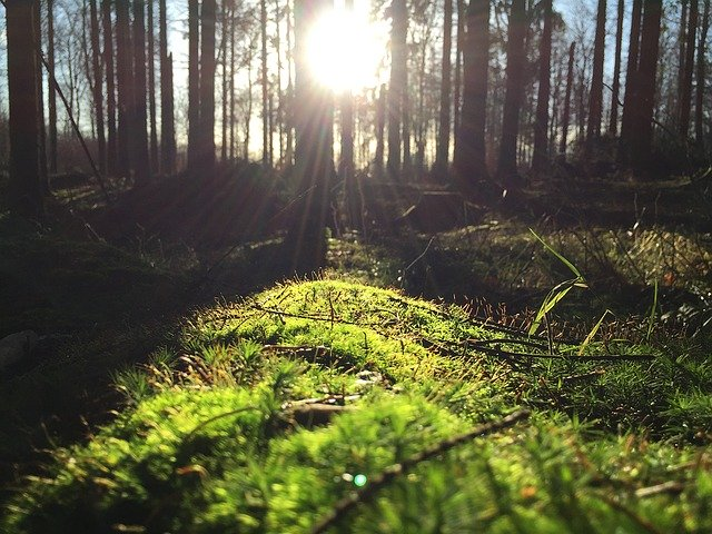 image of sun rising in the woods depicting how ground source heat pumps extract heat from beneath the surface