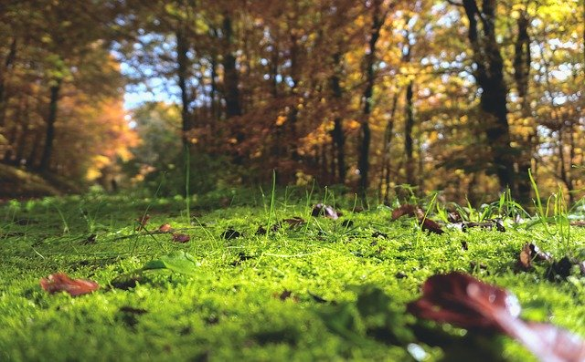 image of forest floor & ambient air suggesting how air source heat pump works