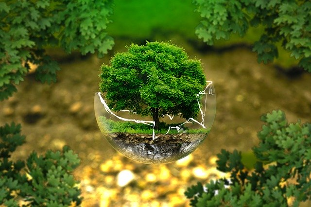 image of a tree in a glass globe representing ground source heat pump installation