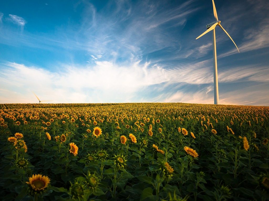 image of a sunflower field with windmill representing how businesses can benefit from renewable technology