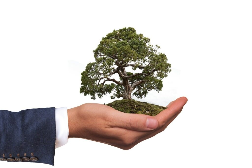 image of hand holding a small tree representing green business practices