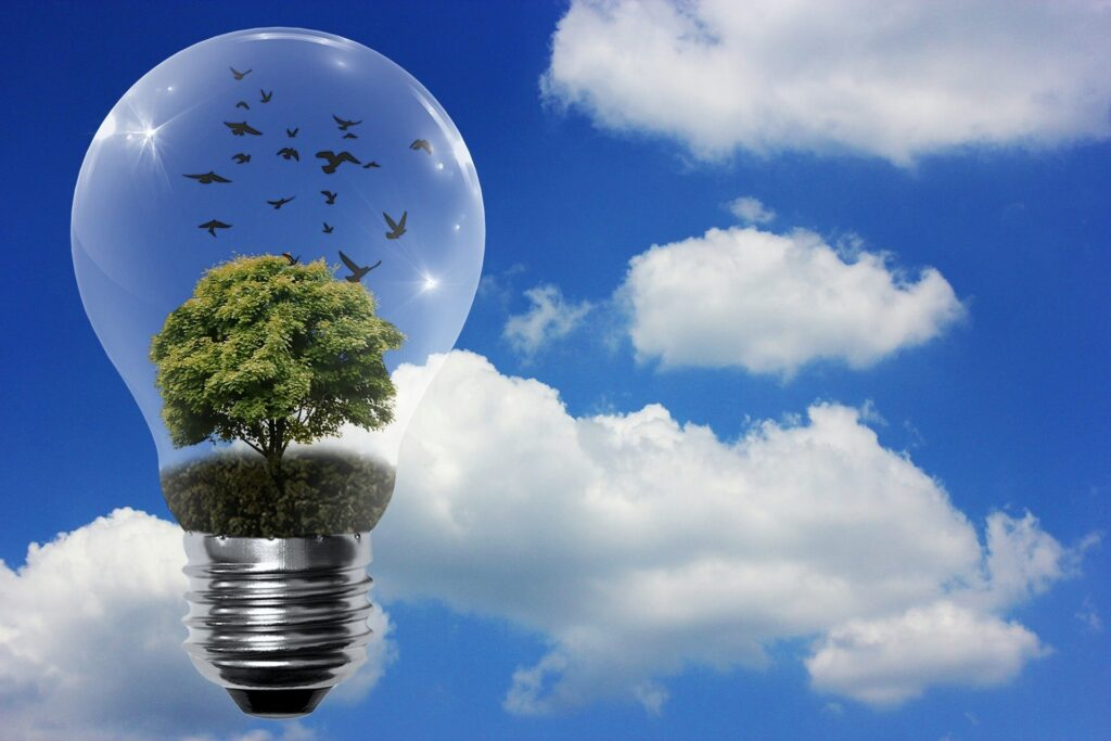 image of a bulb with a tree growing within against the backdrop of a clear blue sky representing renewable energy from ground source heat pumps