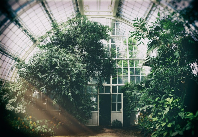 Heat Pump Problems; greenhouse filled with a variety of plants